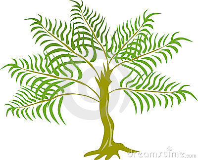 Jungle Fern tree plant