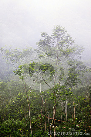 Jungle in a fog