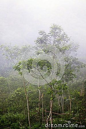 Jungle in a fog