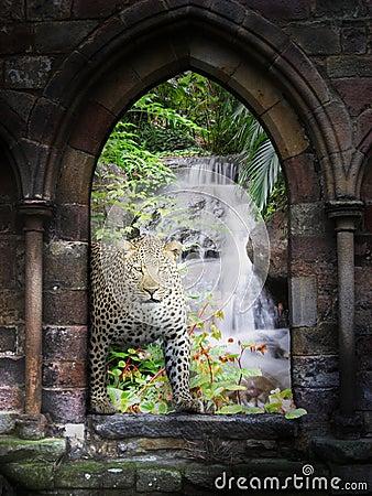 Jungle gateway