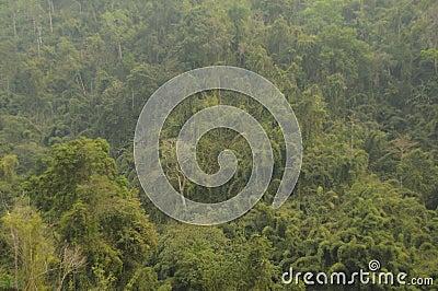 Jungle,Lao