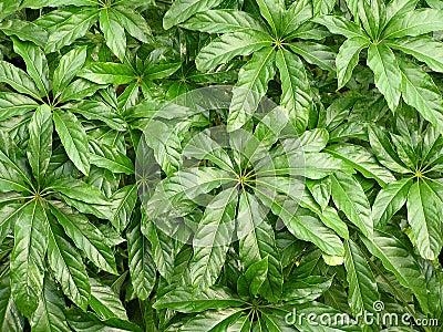 Jungle Leaf Texture 1