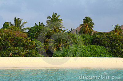Jungle on the maldivian island