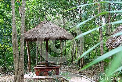 Jungle palapa hut sunroof in Mexico Mayan riviera