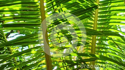 Jungle palm fronds in a gentle breeze stock video footage