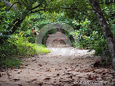 Into jungle path