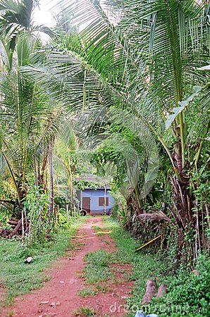Jungle Path and Blue House