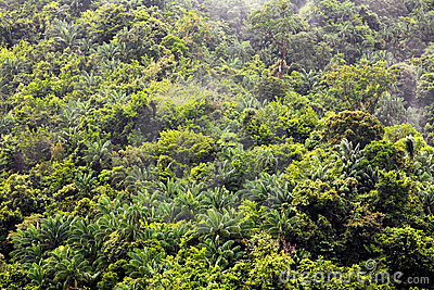 Jungle after rain