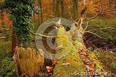 Jungle at river