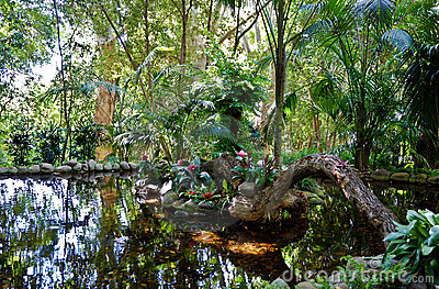 Jungle Scenery - Pond
