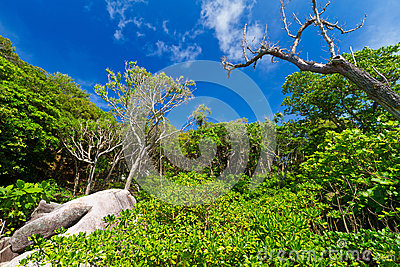 Jungle scenery of Similan islands