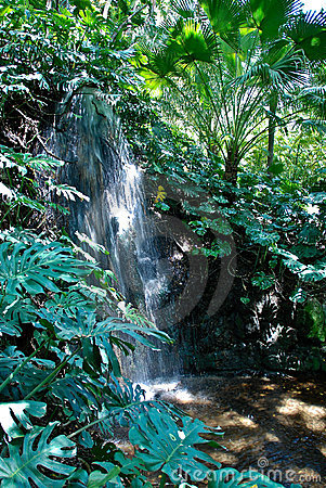 Jungle Scenery - Waterfall