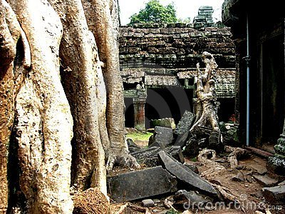 Jungle Temple, Ta Prohm, Cambodia