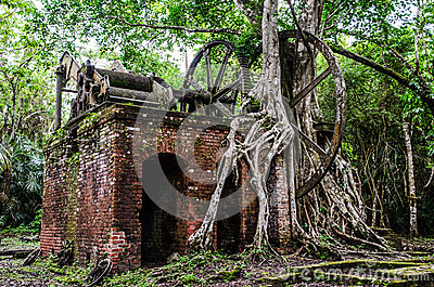 Jungle tree roots and ruined machinery