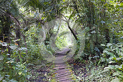 Jungle with walking path