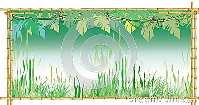 Jungles background