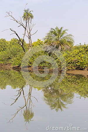 The jungles and river