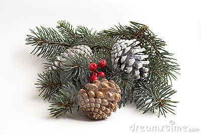 Juniper berries & cones