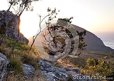 Juniper on cliff