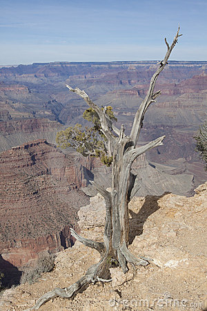Juniper and Grand Canyon