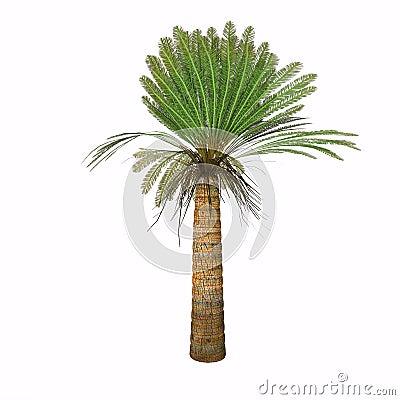 Jurassic Cycad Plant Stock Illustration