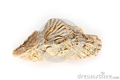 Jurassic shell cluster