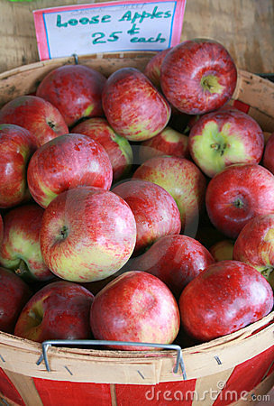 Just Picked Apples in Basket