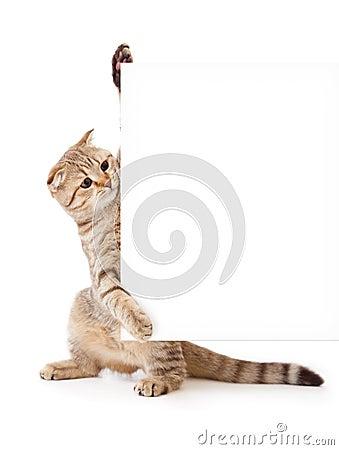 Kätzchen mit Schild oder Fahne für Ihren Text