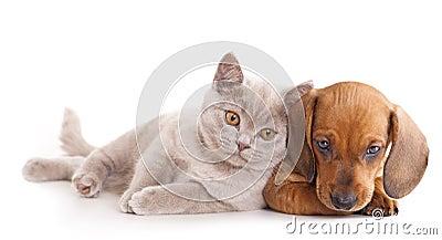 Kätzchen und puppydachshund