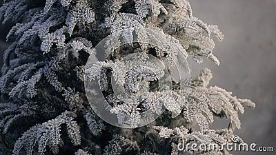 Künstlicher Tannenbaum bedeckt mit Frost ohne den Verzierungsstand Innen stock footage