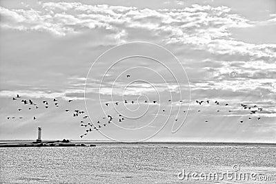 Küstenlinie mit Vögeln.