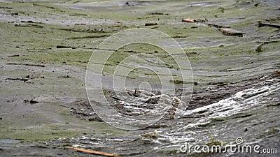 Küstenwellen auf See, schmutziges Wasser mit Müll vor der Küste Ökologie Probleme stock video