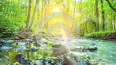 4K - Alise o seguimento do tiro do rio calmo que corre através de uma floresta tropical verde silenciosa, rural