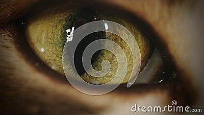 4K Cat Eye Moving e Timelapse de observação