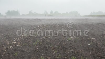 4K Fog in Agriculture Field, Vapor, Fume, Steam on Colza, Rape Cultivate Land stock footage