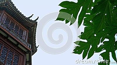4K groot huis met Japanse architectuur, de bouwwhit hout stock video