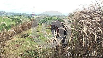 4K materiał filmowy Piękne konie bez koncentracji jedzące z grasingiem w ogrodzie rolnictwo widok na górskie wzgórze Hodowla koni zdjęcie wideo