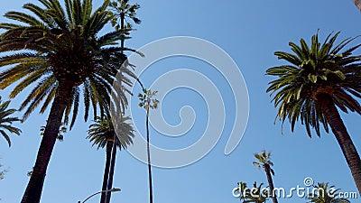 K?rning till och med Beverly Hills med dess palmtr?d - loppfotografi lager videofilmer