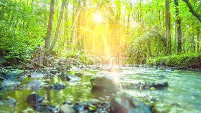 4K - Smooth tracking shot of calm River flowing thru a silent, rural green Tropical Forest. 4K - Ultra HD - Smooth tracking shot of calm River flowing thru a stock video