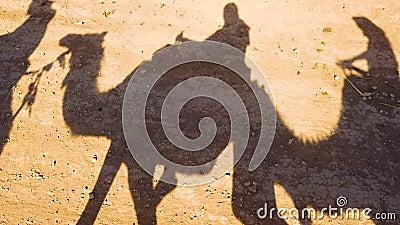 4K vídeo 4 das silhuetas de camelos e de cavaleiros do camelo através do deserto de Sahara A caravana do camelo atravessa o deser filme