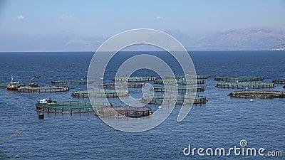 4K Viskwekerij op zee, Hatchery Fishing, Greece Aquaculture, Feeding stock video
