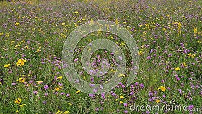 ??ka z pi?knymi dzikimi kwiatami w lecie zdjęcie wideo