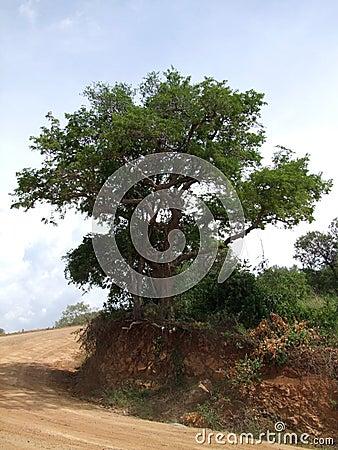 Kabwoya Wildlife Reserve scenery