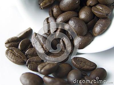 Kaffekorn