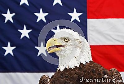 Kahler Adler und amerikanische Flagge