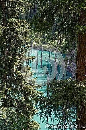 Kaindy lake through firs