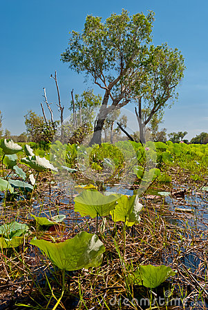 Kakadu National Park vegetation