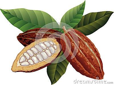 Cacao FuГџballspieler