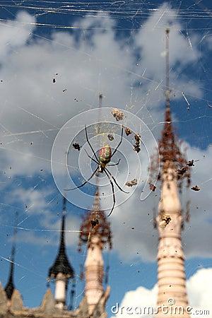 Kakku-spider, Myanmar