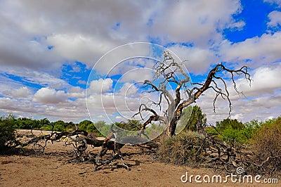 The Kalahari (Botswana)